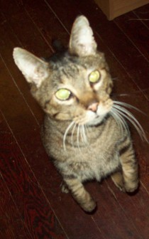 What's Your Cat's Real Name? http://www.ishism.com
