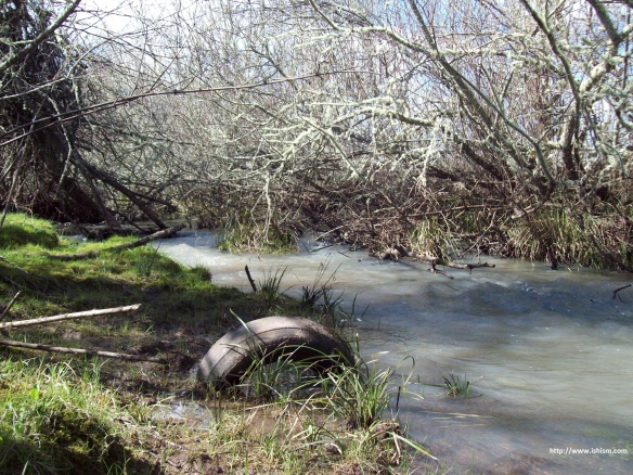 Creek in the Spring, not animated / GIF