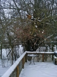 Chicken in the tree