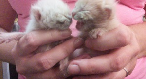 Kittens at 15 Days Old